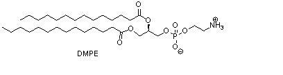 1,2-十四酰基磷脂酰乙醇胺(DMPE)