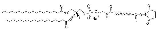 二硬脂酰基磷脂酰乙醇胺-聚乙二醇- N-羟基琥珀酰亚胺