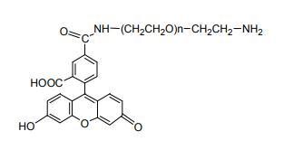 荧光素-聚乙二醇-氨基